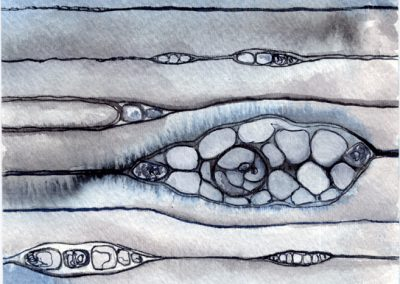 Xylem-Phloem | ink, gouache, watercolor on paper | 6 x 9 inches